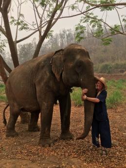Elephants (26)