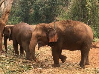 Elephants (40)