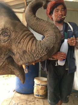 Elephants (42)