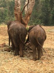 Elephants (49)