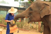Elephants (60)