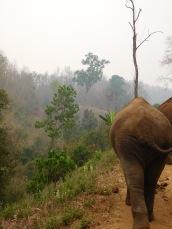 Elephants (66)
